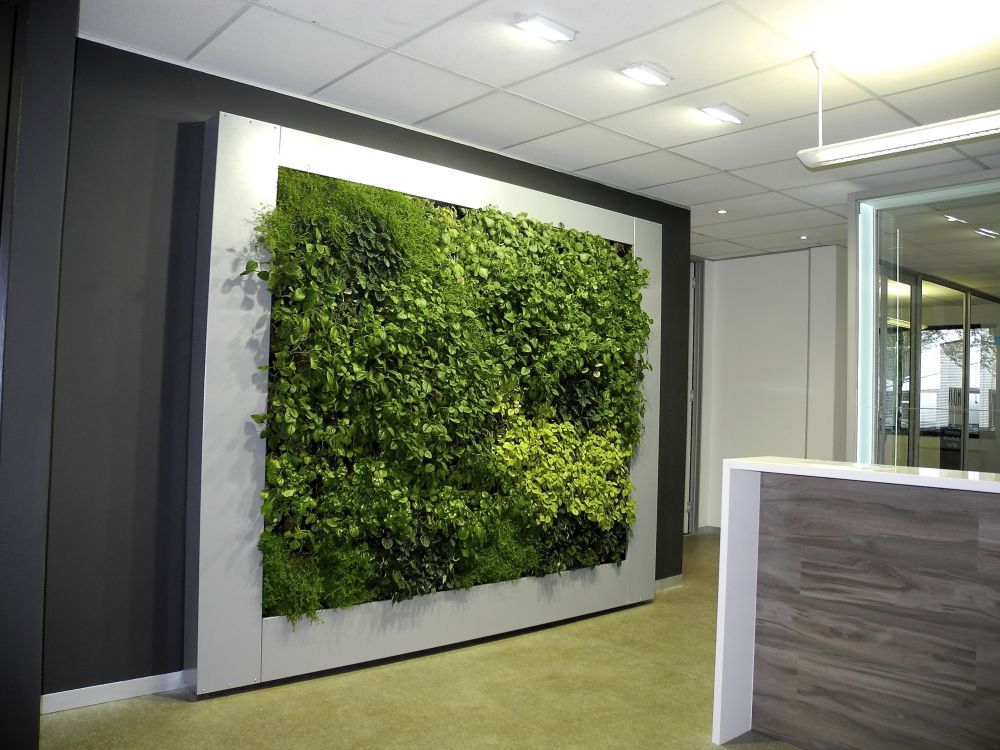 Lemon Green Wall